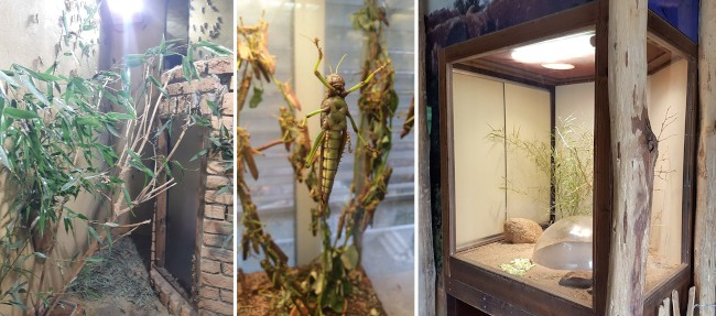 Locusts can be held in different types of enclosures when on display for visitors