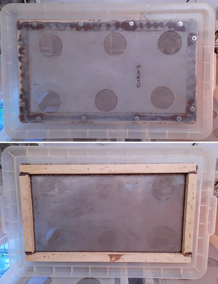 Lid with ventilation holes for dubia cockroaches breeding bin