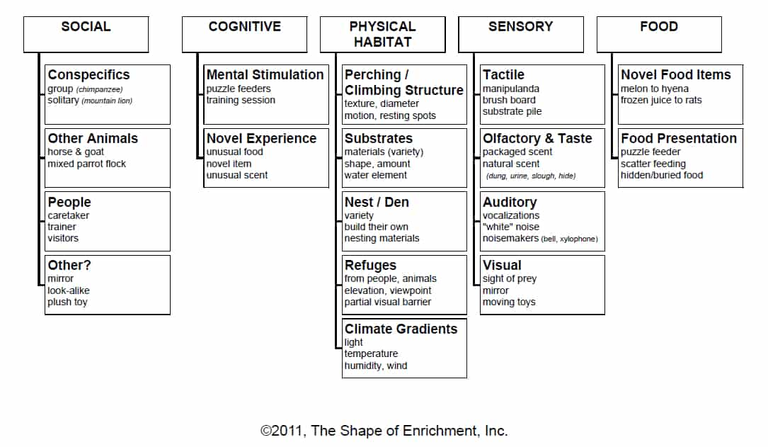 Enrichment categories and different types of enrichment
